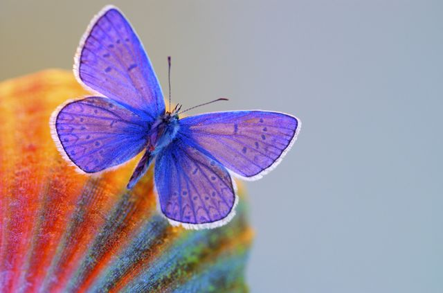 Colorful butterfly to decorate the contact section.